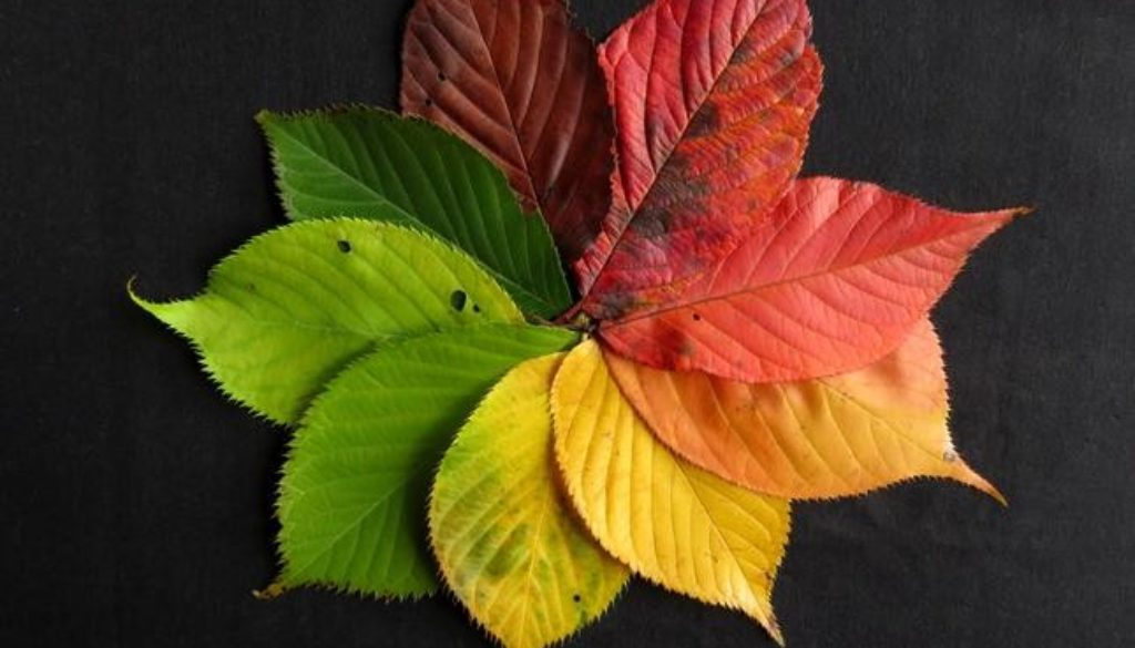 autumn-leaves-1486075_1467983061