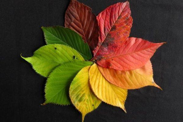 autumn-leaves-1486075_1467983061