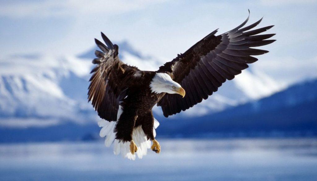 орел, родители, възпитание, самостоятелно дете